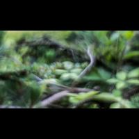 IMG_7579_.jpg (Harmonie)
