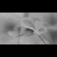 IMG_4171.jpg (Harmonie)