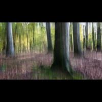 IMG_7932_.jpg (Harmonie)