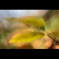 IMG_7439_.jpg (Harmonie)