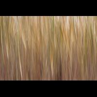 IMG_8697_.jpg (Harmonie)