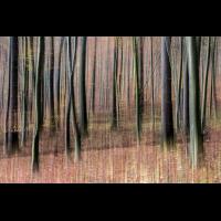 IMG_8491_.jpg (Harmonie)