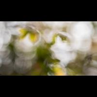 IMG_6888.jpg (Harmonie)