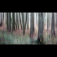 IMG_8617_.jpg (Harmonie)