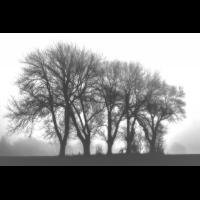 IMG_9362-Kopie v.B..jpg (Harmonie)