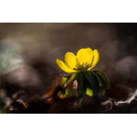 IMG_5951_- Kopie.jpg (Harmonie)