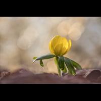 IMG_5939-B.- Kopie.jpg (Harmonie)