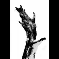 IMG_0101-Bearbeitet-2.jpg (Harmonie)