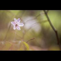 IMG_7047_ - Kopie.jpg (Harmonie)