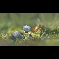 DSC04838 Erstes Frühlingsleuchten... kl pano.jpg (kabefa)