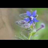 DSC07141 Leuchtend blauer Stern... kl.jpg (kabefa)