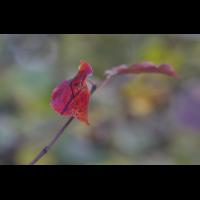 DSC02802 Der Herbst ist bunt... kl.jpg (kabefa)