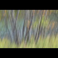DSC02315 Bäume am Fluss... klein.jpg (kabefa)