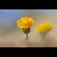 DSC09439 Sunny days... kl.jpg (kabefa)