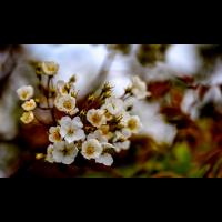 DSC_4451-2.jpg (Nikonudo)