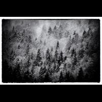 Wald-Noir500.jpg (Nikonudo)