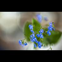 2019-04-19-17-57-33-(B,Radius8,Smoothing4)-1.jpg (Nikonudo)
