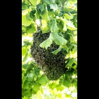 Bienenstock.jpg (Nikonudo)