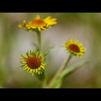 Sonne.jpg (Nikonudo)