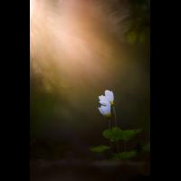 20160528-_DSC5803-klein.jpg (MichaSauer)