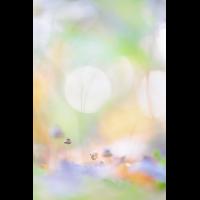 20191013-_DSC6789-klein.jpg (MichaSauer)