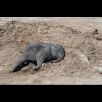 P6290056-1-Elefant-verkl.jpg (hawisa)