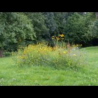 P8120184-1-Blumenwiese-auf-Porling-verk.jpg (hawisa)