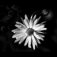 MB8_7313 Kopie verkl.jpg (Moni 3.0)