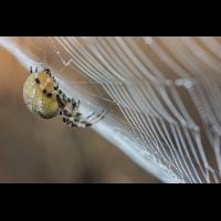 Spinne 3 (1 von 1).jpg (dirk)
