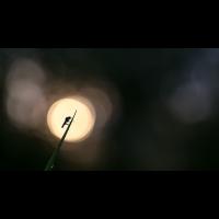 Märzfliege - Sonne 1.jpg (dirk)