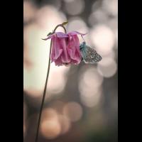 MAD_8306_1200x800.jpg (winterseitler)