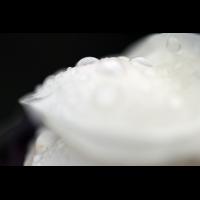 IMG_6054.jpg (mosofreund)