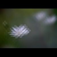 IMG_6097 frag.jpg (mosofreund)