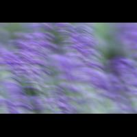 IMG_6273.JPG (mosofreund)