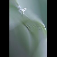IMG_6718.JPG (mosofreund)