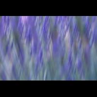 IMG_6281.JPG (mosofreund)