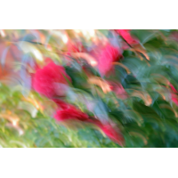 IMG_8141.jpg (mosofreund)
