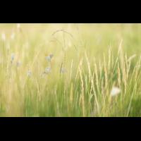 Blick in die Wiese (1 von 1).jpg (Enrico)