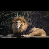 Der König 2018 (1 von 1).jpg (Enrico)