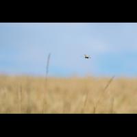Schmetterlingshafte im Flug (1 von 3).jpg (Enrico)