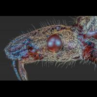 M5_true_-bug_trunk.jpg (Adalbert)
