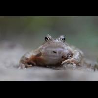animatedfrog3.gif (jo_ru)