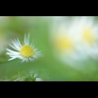 DSC_4109.jpg (Mischi)