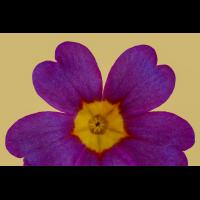 2017-03-024 16-46-50 (B,Radius8,Smoothing4).jpg (Werner33)