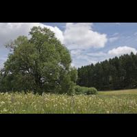 feuchtwiesen4_859.jpg (Artengalerie)