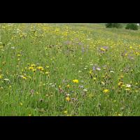 gruenland_sommerwiese_125.jpg (Artengalerie)