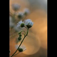 web_3052.jpg (Artengalerie)