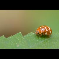 1403_148.jpg (Artengalerie)