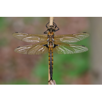IMG_1853.jpg (Artengalerie)