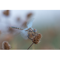 2015_06_21_12635web_516.jpg (Artengalerie)